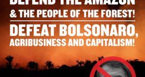 Waarom het Amazonewoud bedreigd wordt: velden, vee en goud
